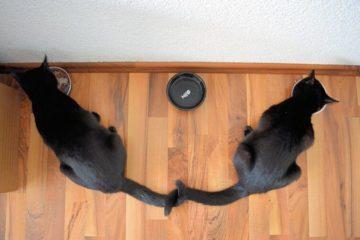 Gatos comen