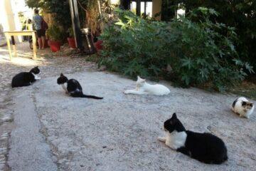 Gatos en Rhodos
